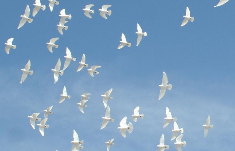 doves away