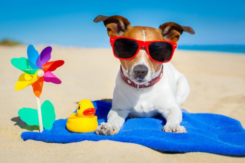 dog_at_beach.jpg