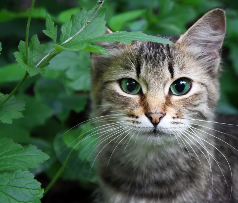 green_eyed_cat_plant.jpg