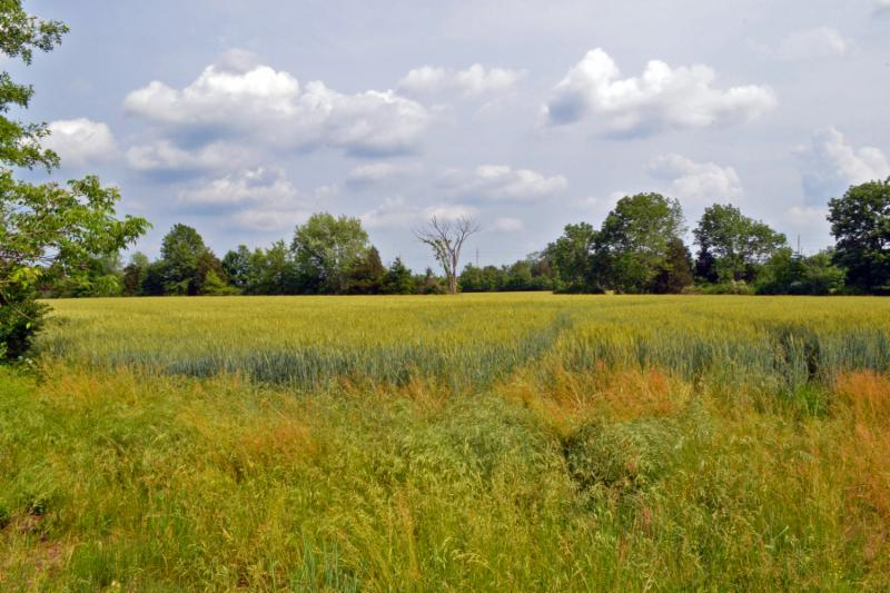 59 acres of field & forest have been preserved by Somerset County & Montgomery Twp. at Rt. 601 & Pleasantview Road