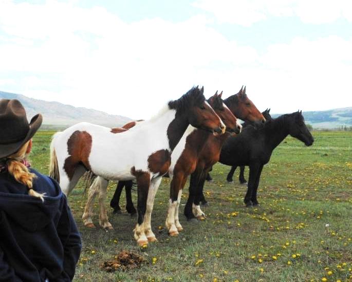 Deerwood Ranch Wild Horses