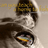Anne Vandewalle Can You Teach a Horse to FIsh?
