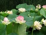 Joyce Eveloff Flowers