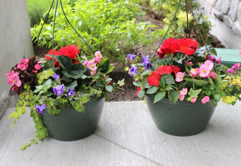 Flower Hanging Baskets Sale : May events raise thousands for children s health foundation