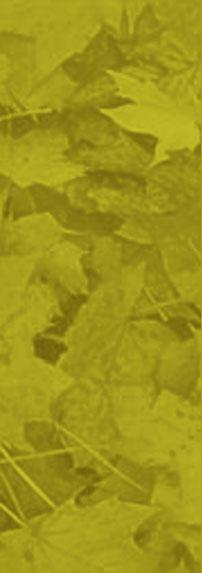 green-blurry-leaves.jpg