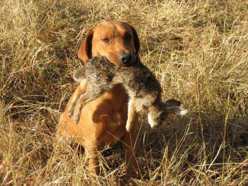 Boomer with rabbit