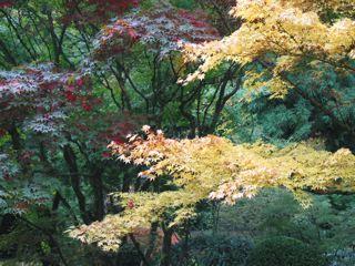 Fall Foliage3