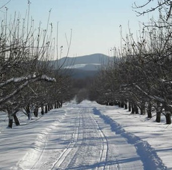 XC Skiing at Hilltop Orchards