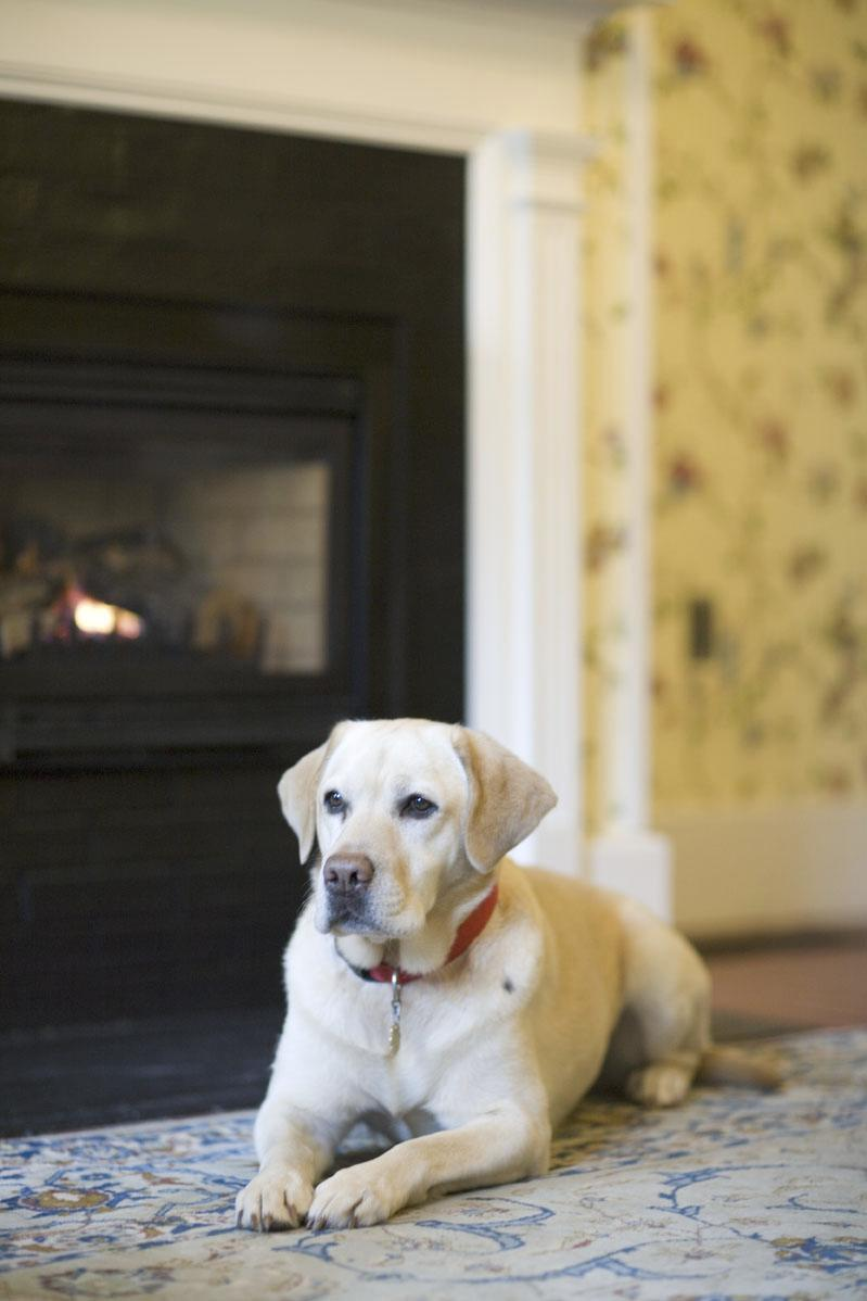 Dog w/ fireplace