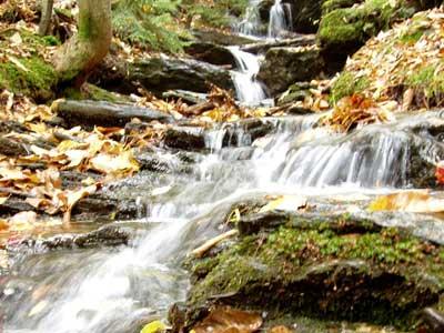 Mount Greylock - Roaring Brook