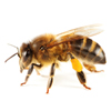 Arizona Bee Control