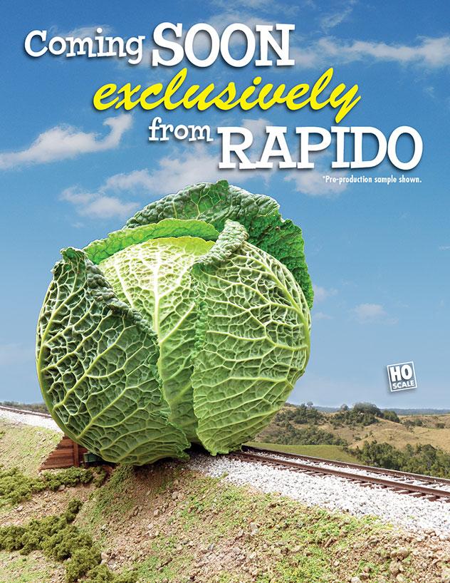 Rapido Cabbage