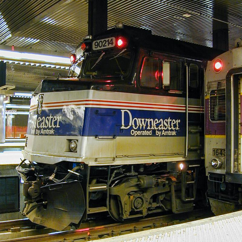Downeaster Cabbage