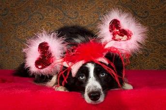 Valentines for Morgan