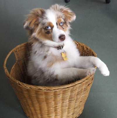 Pup in basket