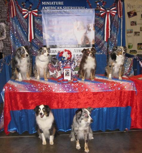 Eukanuba Agility dogs