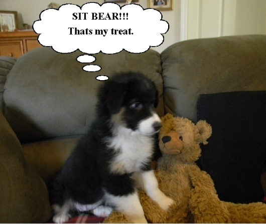 Treat bear