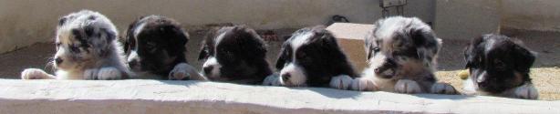 Keller's pups