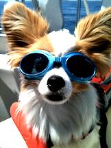 Mika the wonder dog