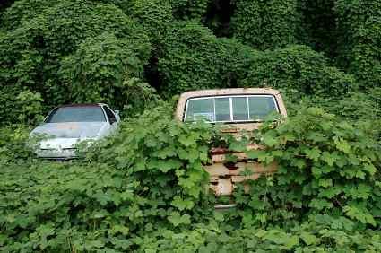 kudzu covering car and truck