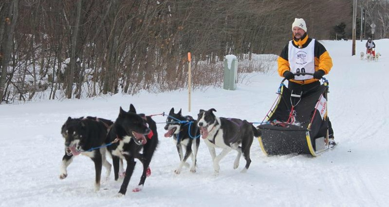 Sled Dog for Sale in Ironwood, Michigan Classified ...
