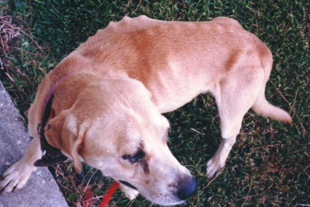 Cruelty Case Dog