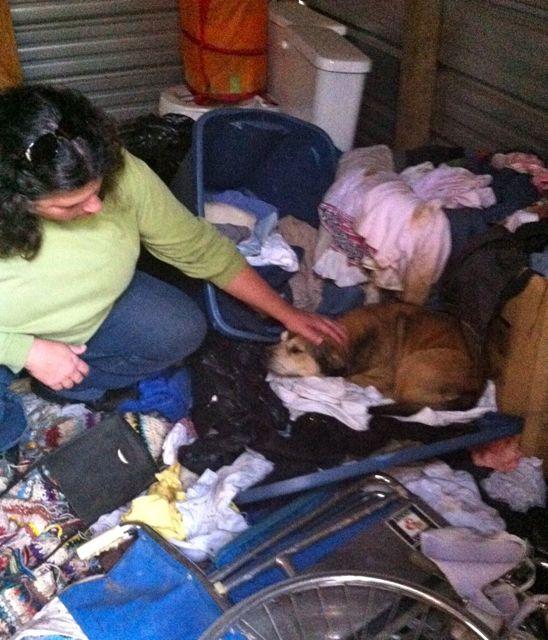 Dog in Hoarder Case