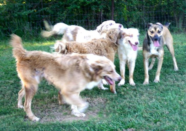 Dogs for Transport from Vermillion