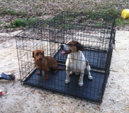Two Dogs f/Murder/Hoarder Case