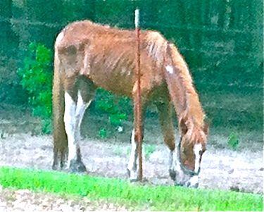 Dodson Horse
