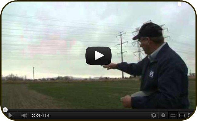 Alfalfa Stem Nematode