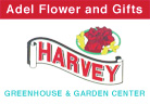Discover Adel Harveys Flowers