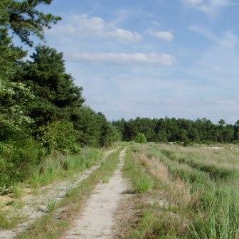 Franklin Parker Preserve trail