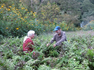 Volunteers Mardell and Diz weeding the edible fern fields