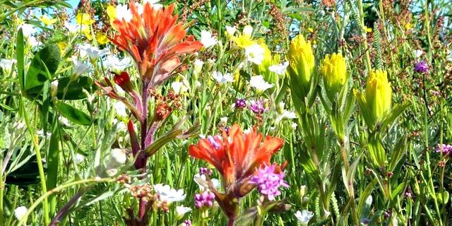 Prairie Flora