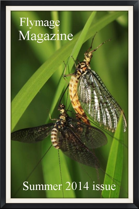 Mayfly mating