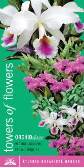 Atlanta Botanical Gardens Orchid Daze