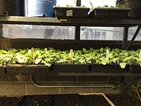 Urban Agriculture 2015 Growing Season