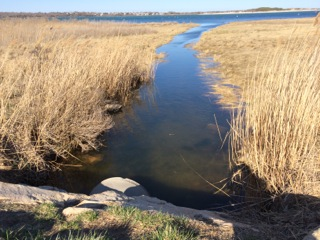 Cockeast Pond