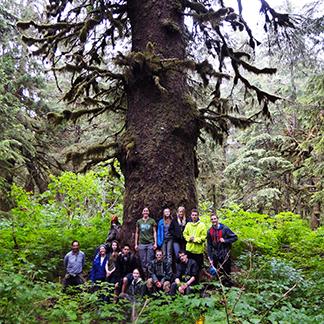 CRSP Big Tree