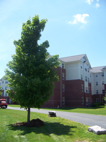 Trees Find New Home - Athletics Facility