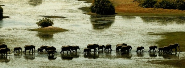 Finest Africa