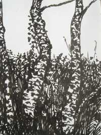 oconnelltrees