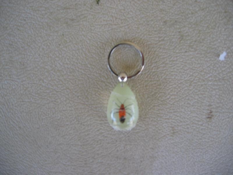 Insect Key Chain