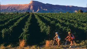 Colorado Bikers, Vineyards