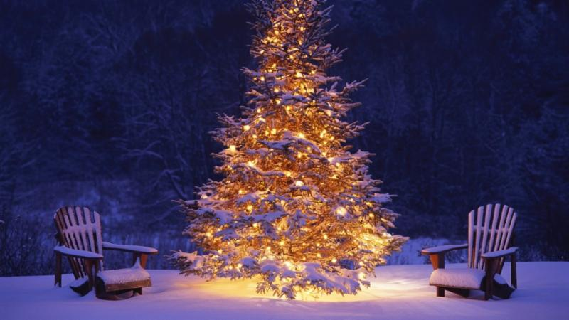 xmas tree at night