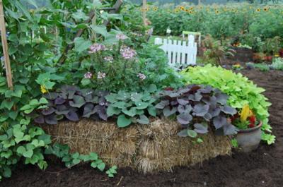 Compost Garden bed