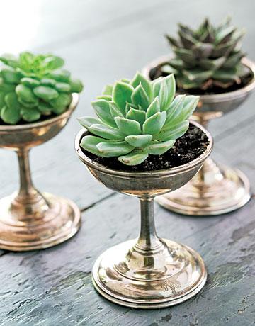 Succulents in Ice Cream Dish
