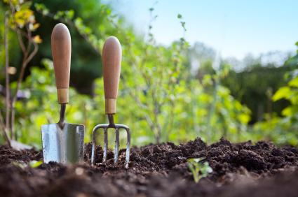 Shovel & garden