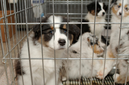 pet store photo 2